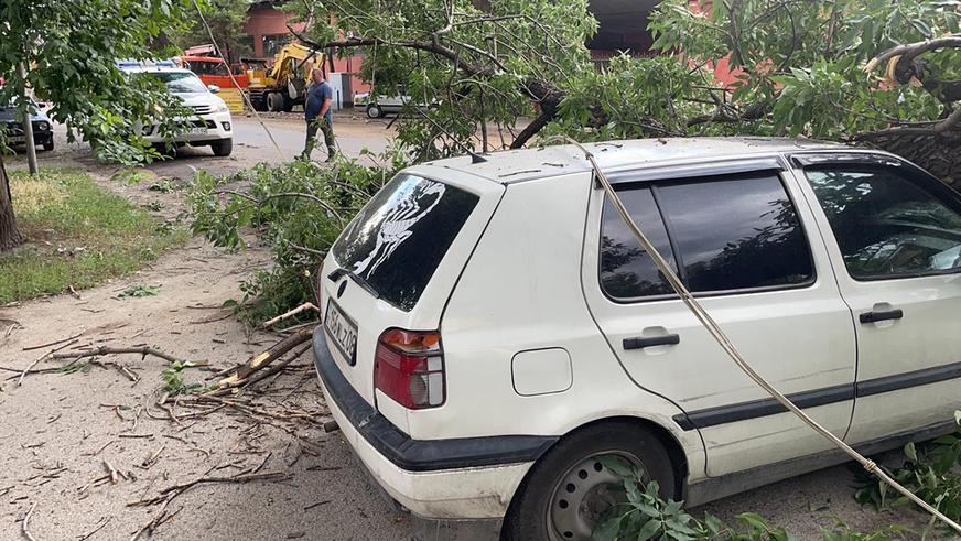 Не ставить машины под деревьями рекомендует ДЧС Алматы