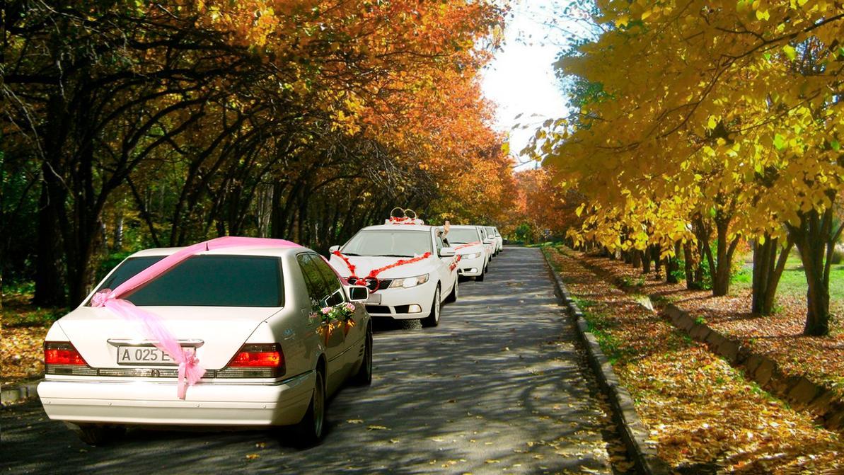 Въезд свадебных авто в Ботанический сад стал бесплатным