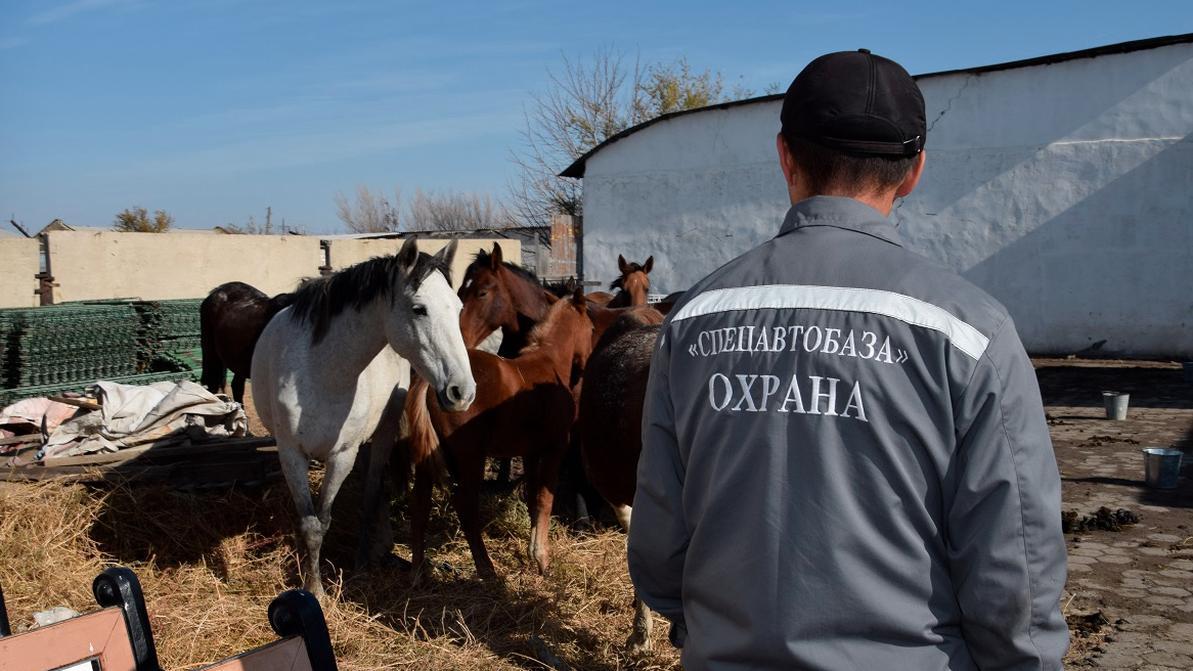 В Атырау на штрафстоянку отправили… табун лошадей