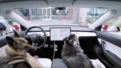 В электромобилях Tesla появился «собачий режим»