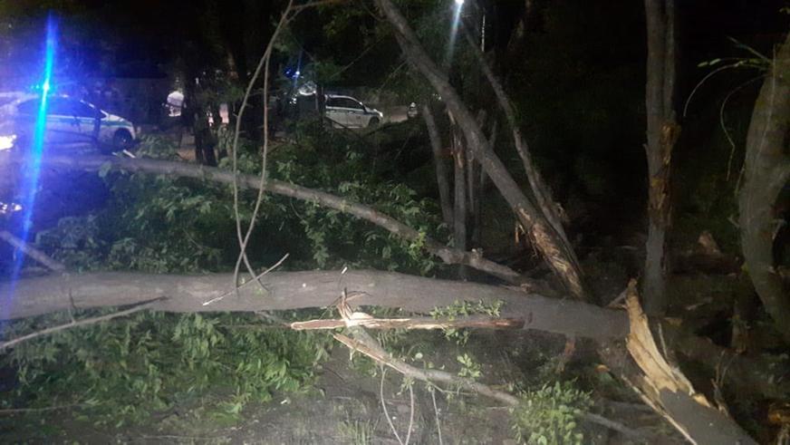 BMW снесла несколько деревьев в Алматы