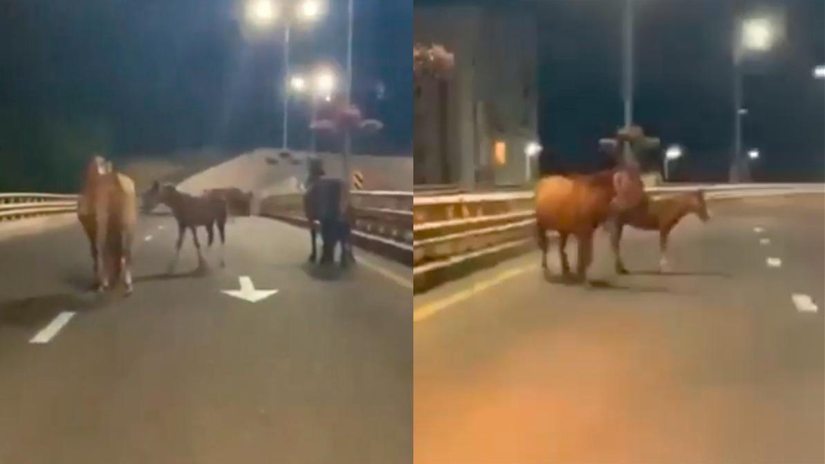 Табун лошадей гулял в Алматы, по развязке над ВОАД