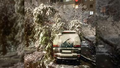 Более десятка деревьев упало из-за снега в Алматы