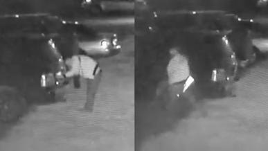 Кражу госномеров в Талдыкоргане засняли на видео