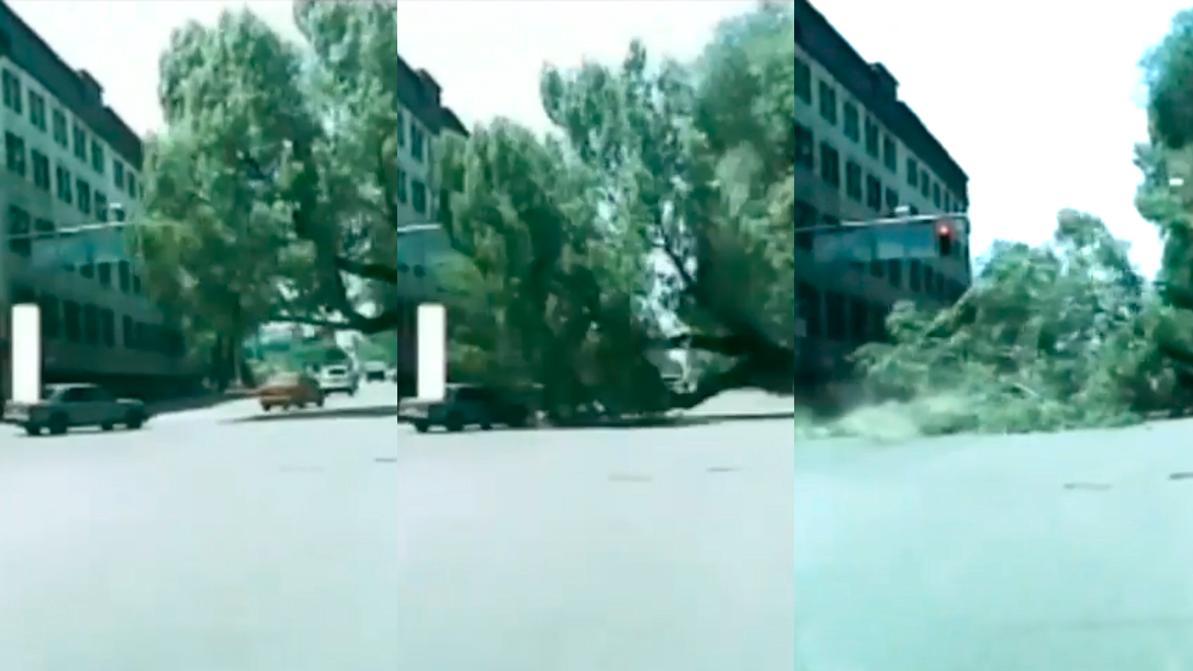 Падение дерева на Mercedes-Benz в Алматы заснял видеорегистратор