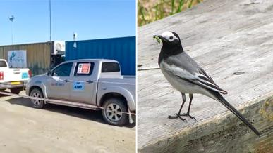 pickup-birds-main-1