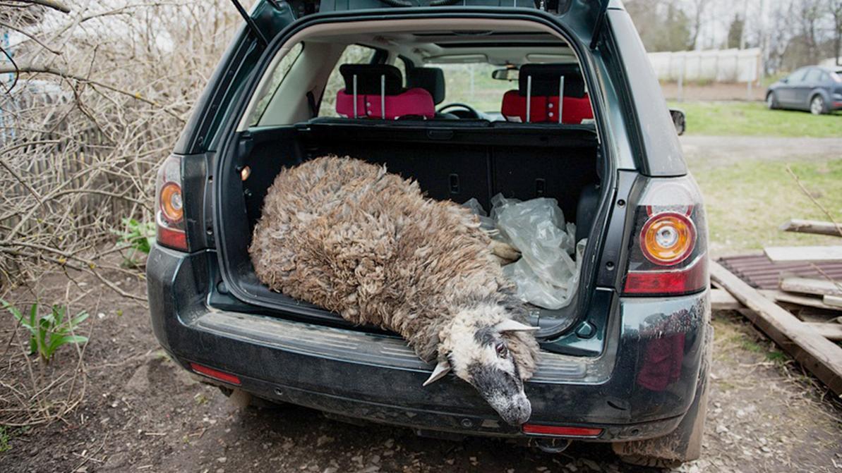 В Алматы запретили ввозить баранов