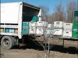 Koegel 1990 года за 1 600 000 тг. в Алматы – фото 2